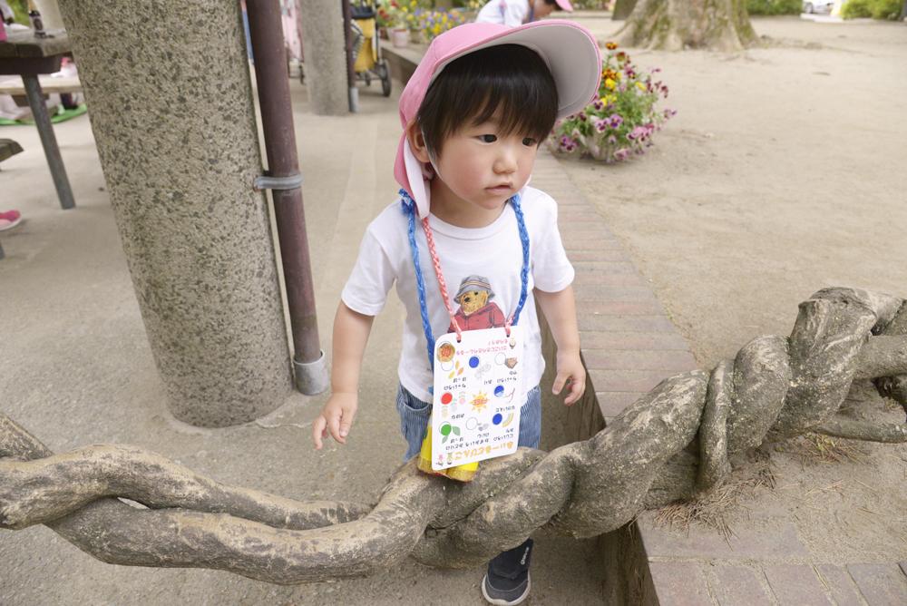 くるくるねじれた幹の藤の木に驚いているお子さんの写真
