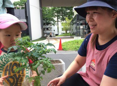 先生と子どもが野菜を育てている様子