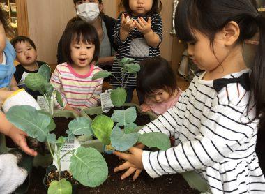 野菜を植えているお子さん